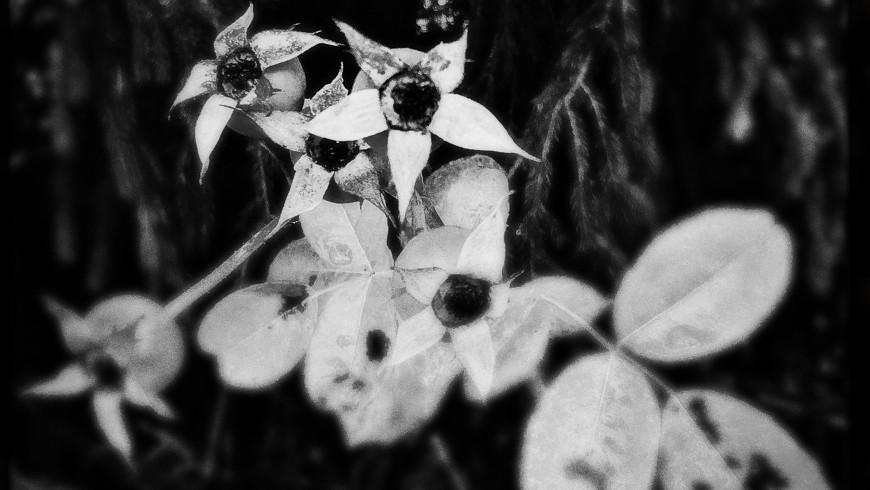 Gräser und Mauerblümchen